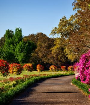 How To Care For Your Tree And Shrub