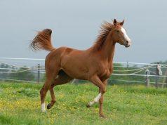 equine lawyer Canton GA c