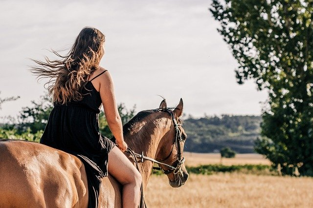 Hire An Equine Lawyer